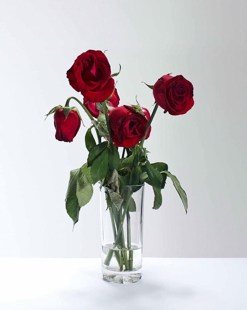 'Dead Rose'